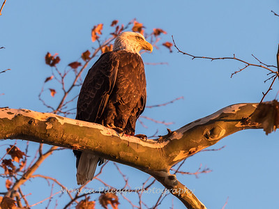 Conowingo October 2017-3975