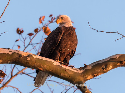 Conowingo October 2017-3943