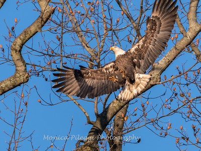 Conowingo October 2017-4051