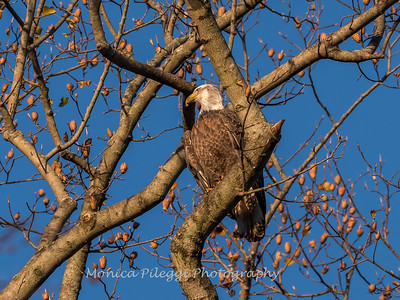 Conowingo October 2017-4057