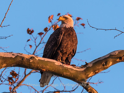 Conowingo October 2017-3952