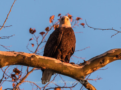 Conowingo October 2017-3967
