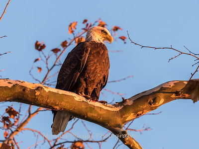 Conowingo October 2017-3970