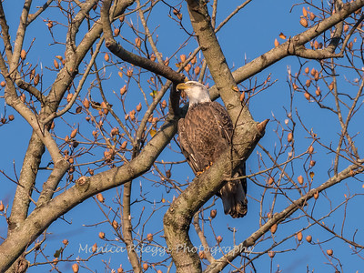 Conowingo October 2017-4055