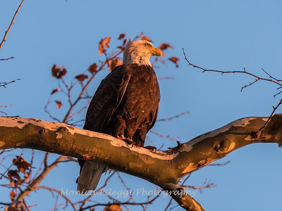 Conowingo October 2017-3960