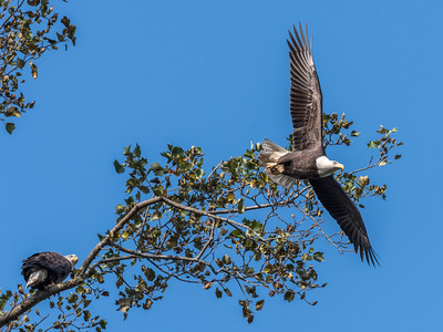 Conowingo Eagles 22 October 2018-0294