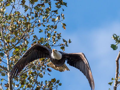 Conowingo Eagles 22 October 2018-0310
