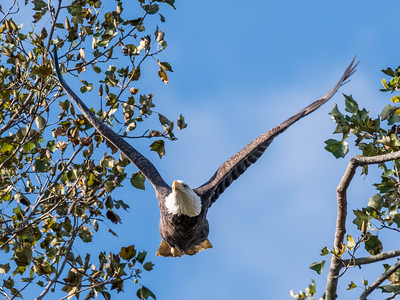 Conowingo Eagles 22 October 2018-0308