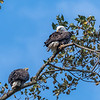 Conowingo Eagles 22 October 2018-0280