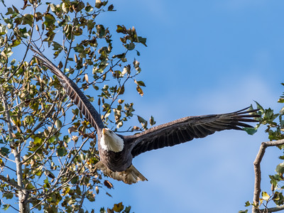 Conowingo Eagles 22 October 2018-0311