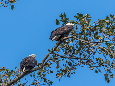 Conowingo Eagles 22 October 2018-0291