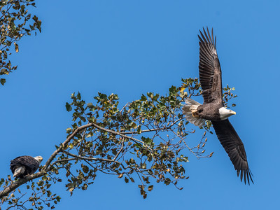 Conowingo Eagles 22 October 2018-0295