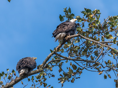 Conowingo Eagles 22 October 2018-0281