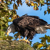 Conowingo Eagles 22 October 2018-0187