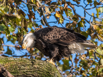 Conowingo Eagles 22 October 2018-0190
