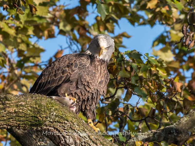 Conowingo Eagles 22 October 2018-0183