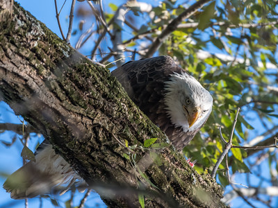 Conowingo Eagles 22 October 2018-0208