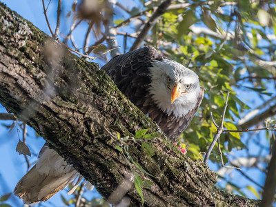 Conowingo Eagles 22 October 2018-0199