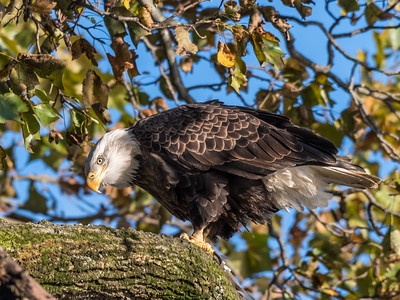 Conowingo Eagles 22 October 2018-0189