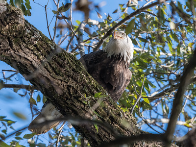 Conowingo Eagles 22 October 2018-0216