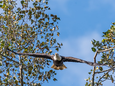 Conowingo Eagles 22 October 2018-0309