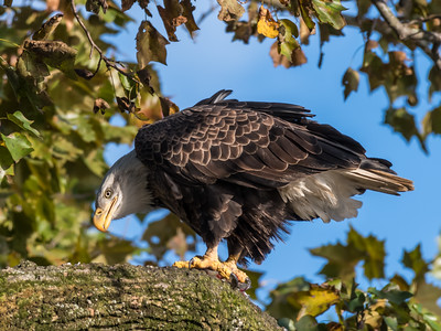 Conowingo Eagles 22 October 2018-0185