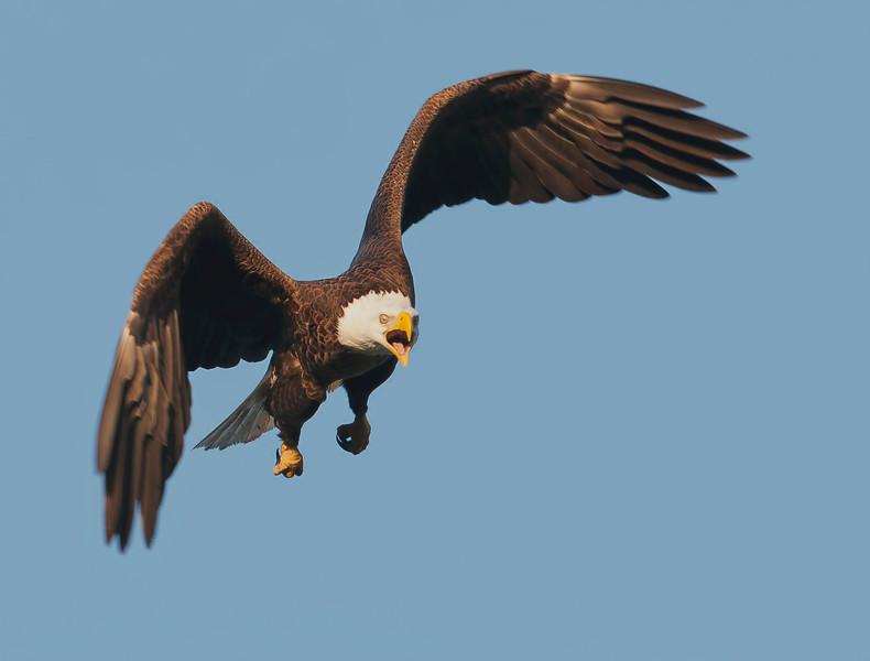 eagle0209