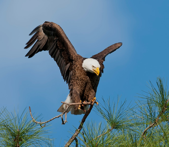 eagle020213top