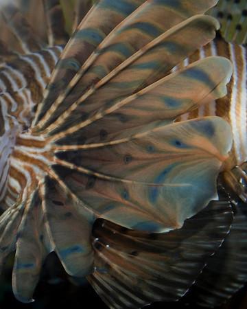 Baltimore Aquarium Pics 2009
