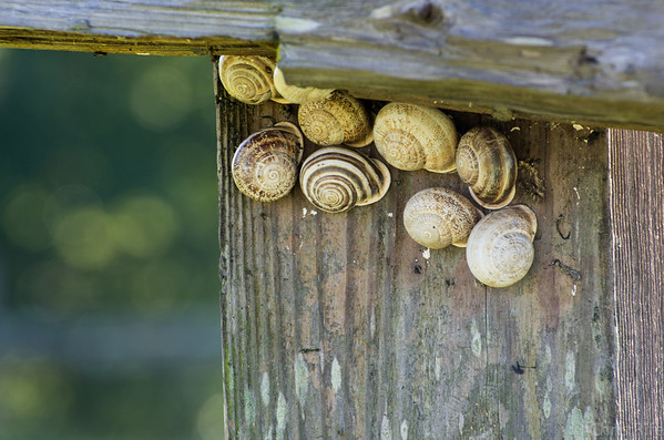 Lots and lots of snails.