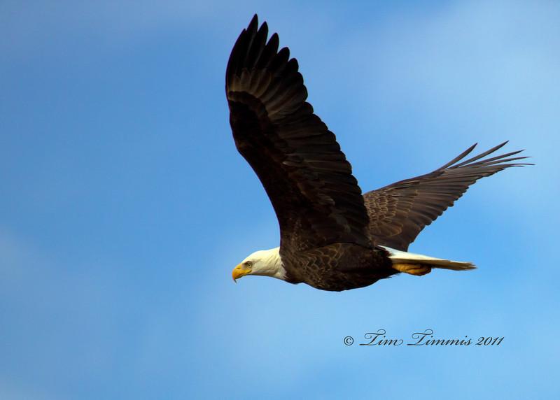 Baytown Eagle