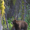 Black Bear - © edhughesphoto.com 2007