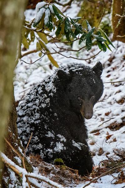 Bears, Bucks, and Does