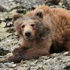 Year old cub