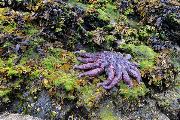 Multiarmed starfish
