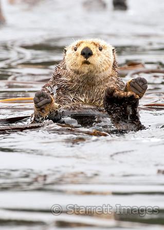 Otter, keeping his feet warm
