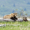 Sow and cub relaxing