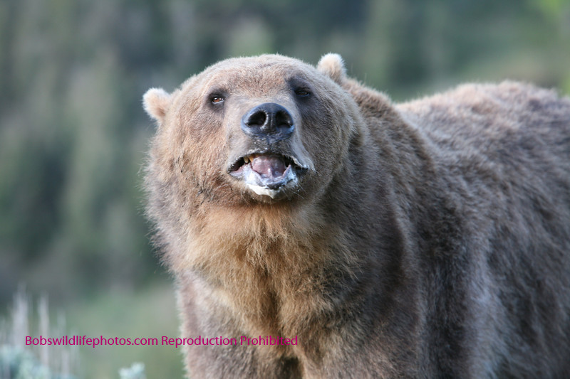 Grizzly thinking.