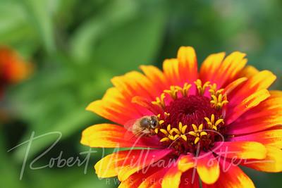 Honeybee 2272