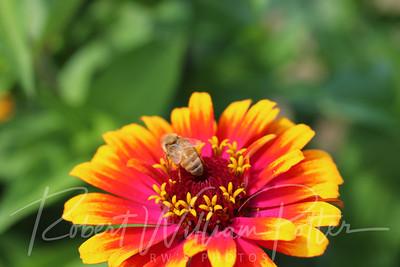 Honeybee 2269