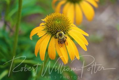 Bumblebee 2160