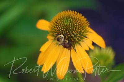 Bumblebee 2163
