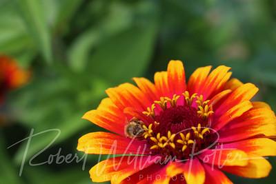 Honeybee 2271