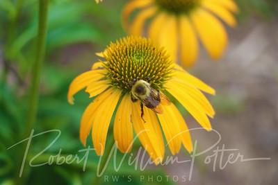 Bumblebee 2161