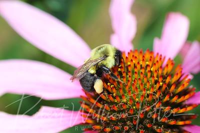 Bumblebee 2260