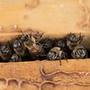 Hive 1.  Sustainable City Bee Garden. 2 April, 2018. Photo by: Stephen Hindley ©