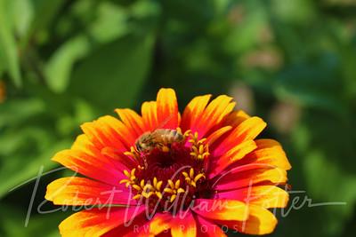 Honeybee 2268