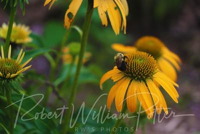 Bumblebee 2158
