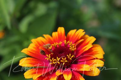 Honeybee 2270