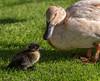 Hotel Ducks